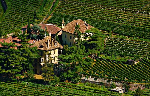 Картинка фото, Город, Замок, Ель, Италия, Поля, castle Bolzano, Vinery