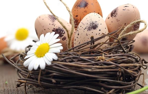 Картинка ромашки, яйца, пасха, flowers, eggs, easter, nest, camomile