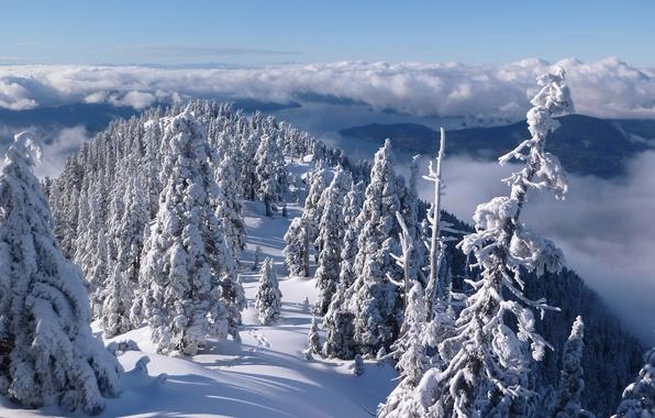 Картинка зима, лес, облака, снег, деревья, горы, Канада, панорама, Ванкувер, Canada, British Columbia, Vancouver, Британская Колумбия, …