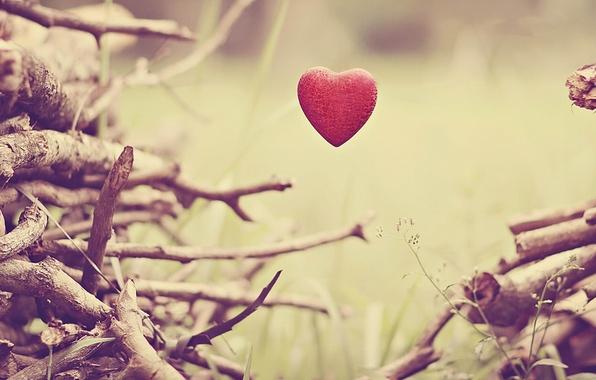 Картинка цветок, листья, деревья, цветы, ветки, фон, настроения, сердце, стебель, ствол, сердечко, HD wallpapers, обои для …