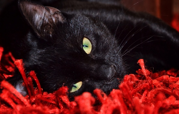 Картинка кот, взгляд, кошак, лежит, смотрит, котяра