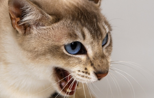Картинка кошка, взгляд, настроение