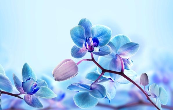 Картинка макро, природа, ветка, лепестки, орхидея