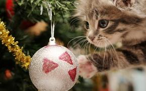 Картинка праздник, новый год, котёнок, мишура, happy kitten, ёлочные шары, игривый