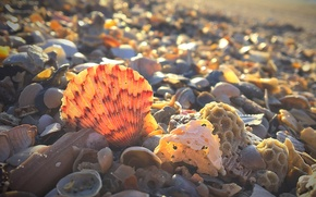 Обои Южная Каролина, берег, раковина, ракушки, США