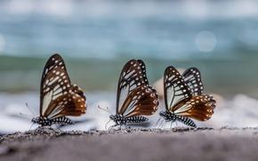Обои три, блики, трио, Бабочки, макро