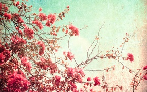 Картинка лето, небо, цветы, бумага, зерно, свечение, текстура, день, пятна, wallpaper, картон, орнамент, материал, цветение, vintage, ...