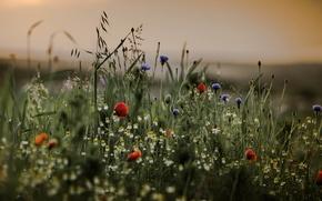Картинка трава, цветы, стебли, боке