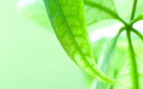 Обои зелень, макросьемка, листок