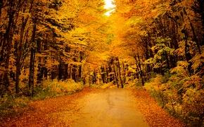 Обои дорога, деревья, кусты, листья, желтые, золотая, осень, лес