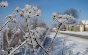 Картинка зима, снег, растения, winter, snow