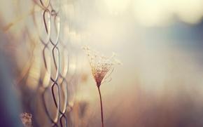 Картинка макро, сетка, растение
