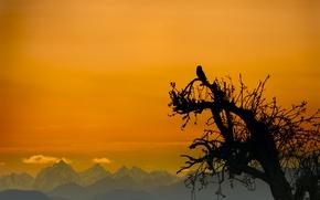 Картинка небо, горы, дерево, сова, птица, силуэт, зарево