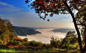 Картинка лес, горы, туман, Германия, Germany, дерево., Klotten