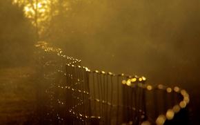 Картинка солнце, макро, деревья, фон, сетка, обои, размытие, ограда, ограждение, wallpaper, широкоформатные, background, macro, полноэкранные, HD …