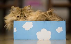 Картинка кошка, облака, коробка, сон, Daisy, Ben Torode, Benjamin Torode