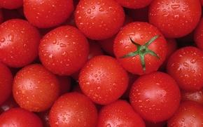Обои помидор, овощи, текстура, томат, капли