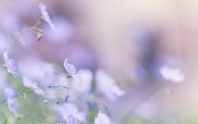 Обои нежность, макро, цветы, Лён, размытость, голубой, лето, весна