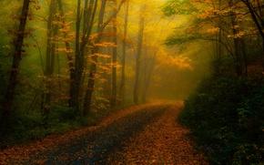 Картинка Северная Каролина, природа, туман, обработка, деревья, дорога, листва, осень, лес, США