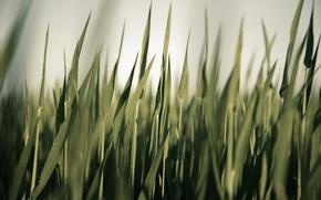Обои зелень, трава, photographer, осока, markus spiske