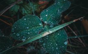 Картинка осень, трава, капли, макро, дождь, клевер