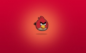 Обои птицы, рио, rio, angry birds, мультфильмы