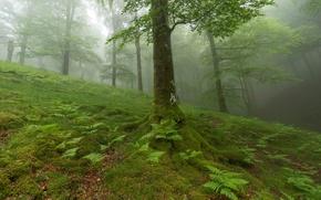 Картинка лес, трава, листья, деревья, растения, склон