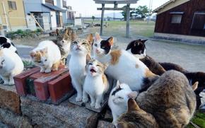 Картинка стая, кошки, банда