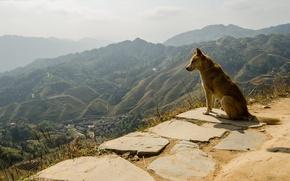 Картинка природа, друг, собака, панорама, пёс