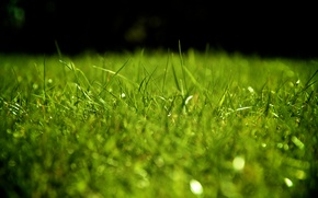 Обои трава, зелень, газон