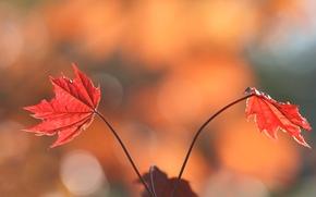 Картинка осень, листья, природа, краски