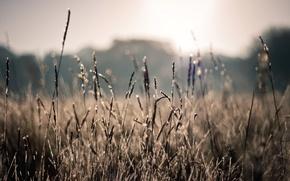 Картинка поле, лето, солнце, макро, лучи, природа, фото, растения, размытость, колоски, wallpapers, боке, bokeh