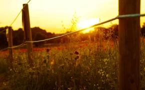 Картинка солнце, макро, цветы, фон, widescreen, обои, забор, веревка, ограждение, wallpaper, цветочки, широкоформатные, flowers, background, sun, ...