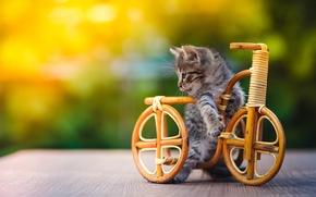 Картинка велосипед, котенок, игрушка, кот.кошка