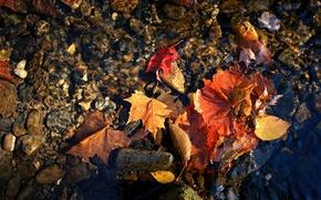 Обои макро, красные листья вода, осень