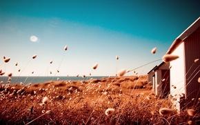 Картинка поле, дом, Солнце