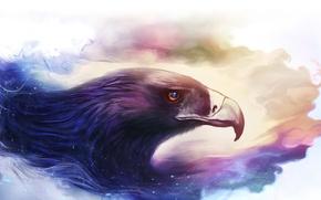 Картинка птица, орел, рисунок