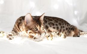 Картинка кошка, лежит, гирлянды, смотрит