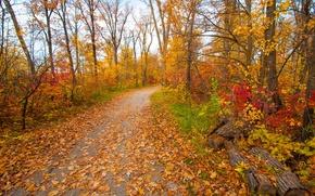 Обои грусть, осень, листья, деревья, парк, настроение, сад, дорожка, багрянец