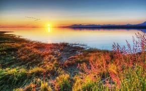 Картинка трава, закат, птицы, озеро, берег
