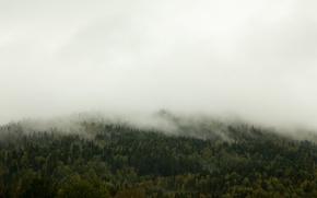Картинка trees, fog, hill