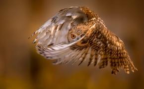 Картинка сова, фон, полёт, крылья