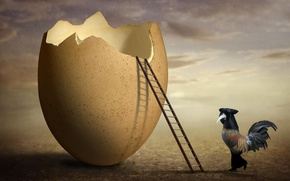 Картинка яйцо, скорлупа, art, петух, The inspector