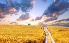 Картинка дорога, поле, облака, желтый, дерево