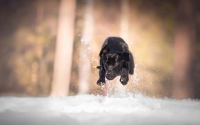 Картинка снег, собака, бег