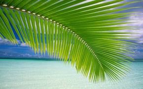 Обои море, берег, пальма
