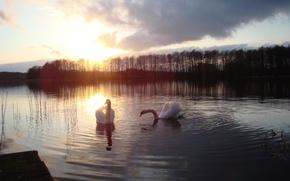 Картинка закат, озеро, лебЕди