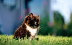 Картинка кошка, трава, кот, город, котенок, черный