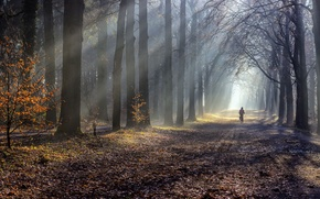 Картинка дорога, осень, туман, утро