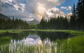 Картинка лес, горы, озеро, отражение, спокойствие, Калифорния, США